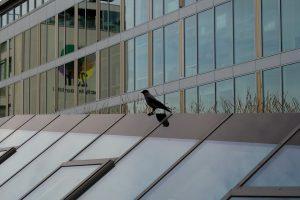 bird strike window film miami