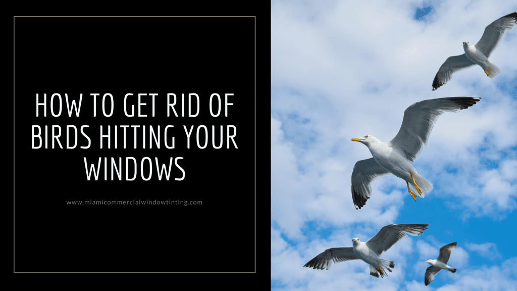 get rid birds hitting windows miami